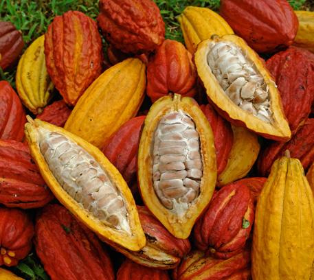 K L  KRIS FOOD INDUSTRIES SDN  BHD  | Alkalized Cocoa Powder